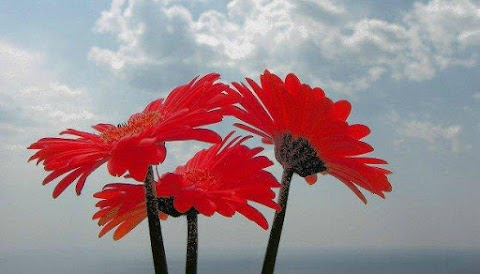 Τα λουλούδια του Σεπτέμβρη!!!