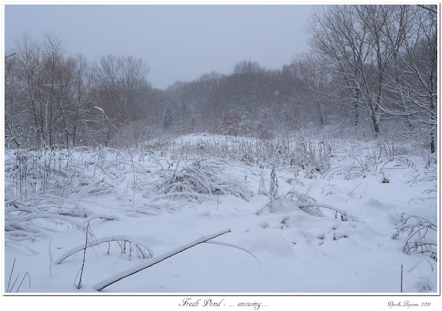 Fresh Pond: ... snowing...