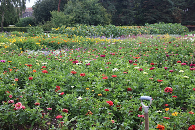 Plenty of colour on a rainy day at Mr Fothergill's trials field