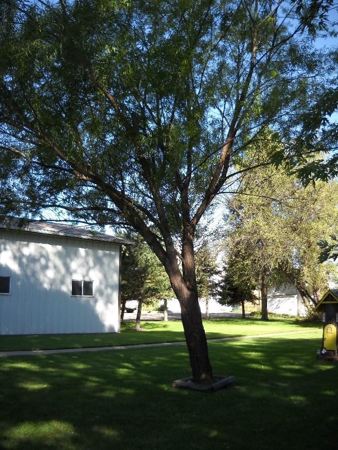 CO-Horts: Tree Trunks Tell A Story