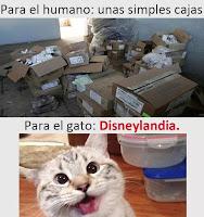 cajas para gatos humor