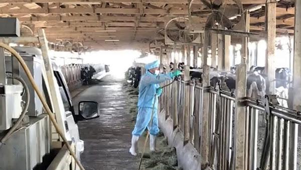 彰化成立牛結節疹緊急應變中心 超前部署強化動物防疫