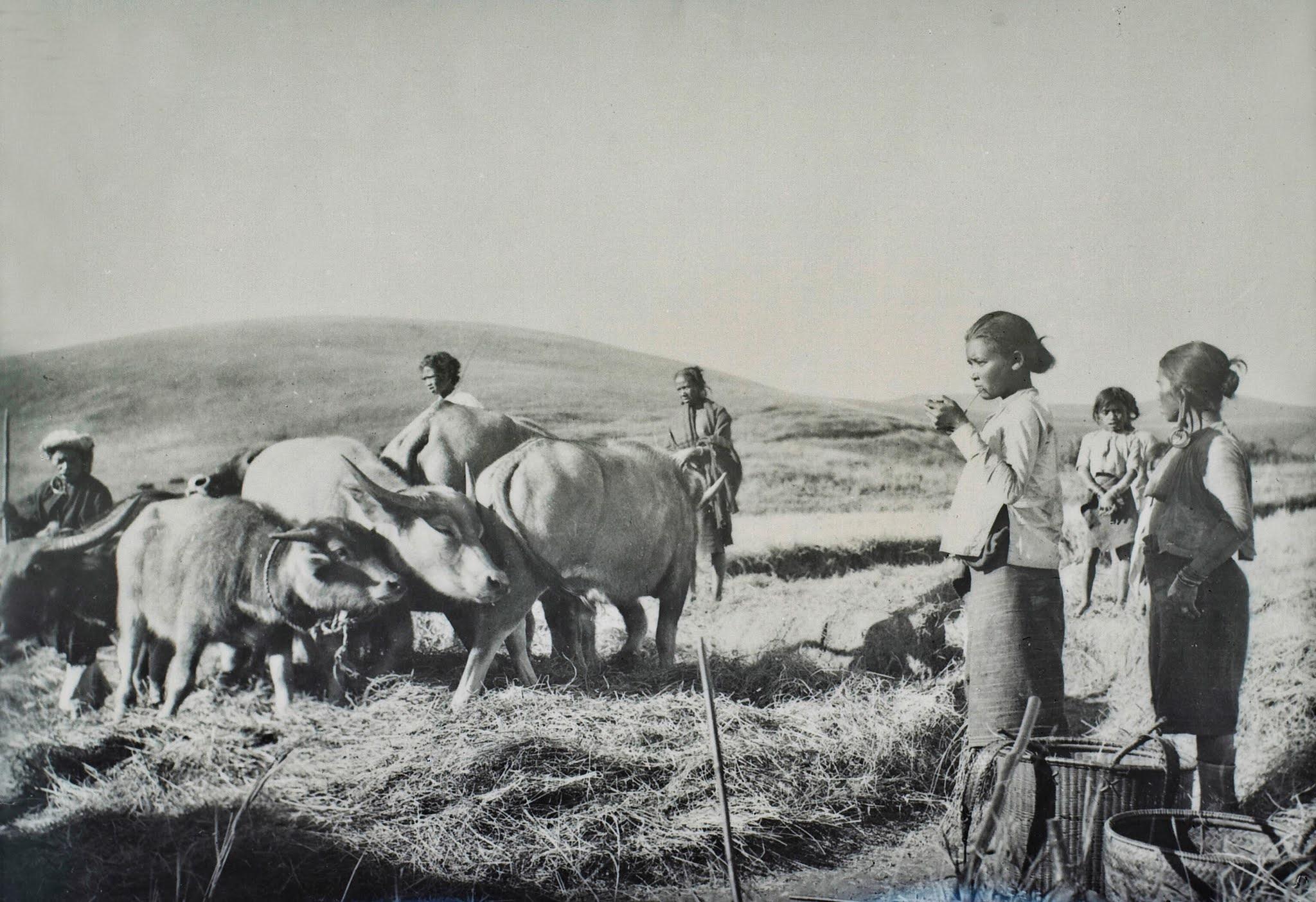 Hình ảnh con trâu ở nông thôn Việt trong tranh ảnh đầu thế kỷ 20