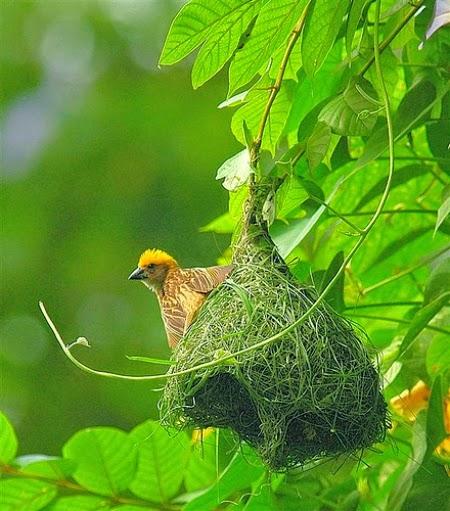 Tổ chim trên thân cây