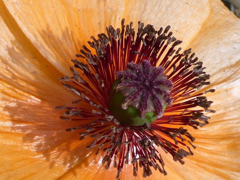 fotosderwoche.blogspot.com