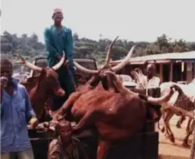 Pandemonium As Youths Burn Down Fulani Cow Market In Oyo
