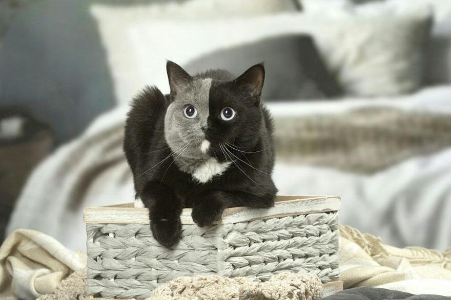 Double Face cat 5