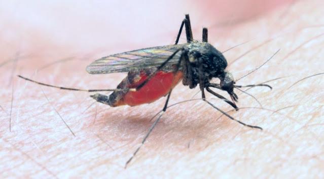 Malaria se bachne ke upay