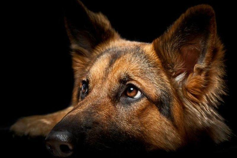 Ποια είναι τα πρόστιμα για όσους δεν έβαλαν τσιπ και δεν μαζεύουν τις ακαθαρσίες των σκύλων