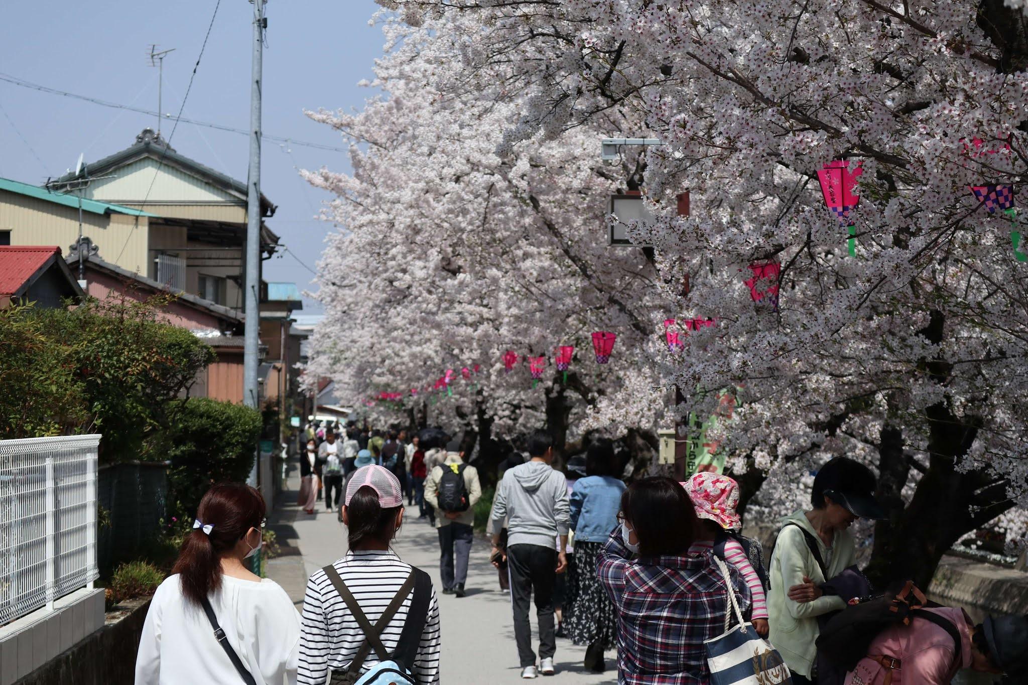 岩倉桜まつり12
