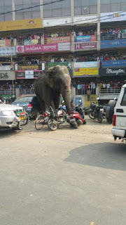 elephant near City Plaza siliguri