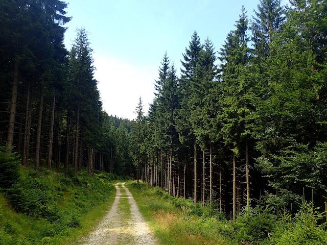 Leśna droga w Bielicach