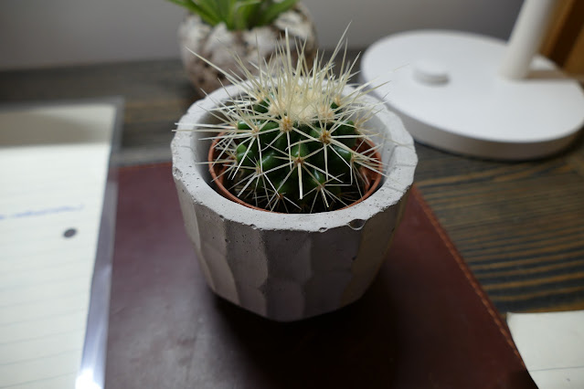 Best Shop To Buy Cactus From in UK, cactus shop uk, golden barrel cactus buy uk, cactus cereus Florida buy, cacty shop uk, cacty review, buy succulent plants uk, where to buy cacti uk