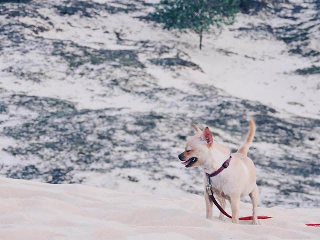 Cồn cát Quang Phú còn là nơi lí tưởng để lưu lại những bức ảnh đẹp của riêng bạn hay những bức ảnh cùng gia đình, bạn bè. Những bức ảnh hòa mình cùng thiên nhiên, đi trên thiên đường cát sẽ là những kỉ niệm đáng nhớ, tuyệt vời nhất.