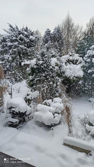 ogród atrakcyjny jezienią i zimą
