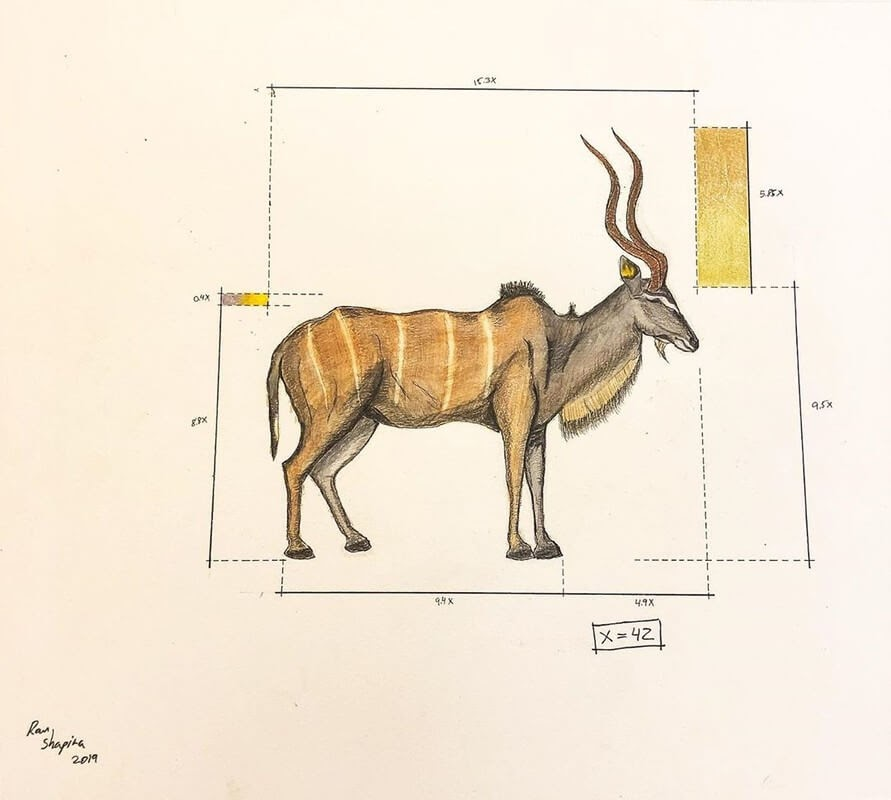 11-Nyala-Ran-Shapira-Animal-Drawings-from-a-Sculptor-s-Perspective-www-designstack-co