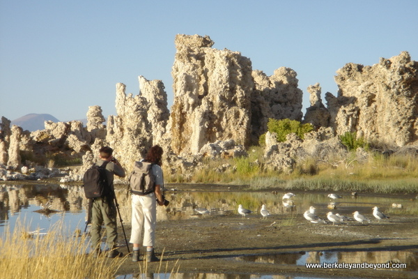 photographers and seagulls among the unusual formations at Mono Lake in Lee Vining in Eastern California