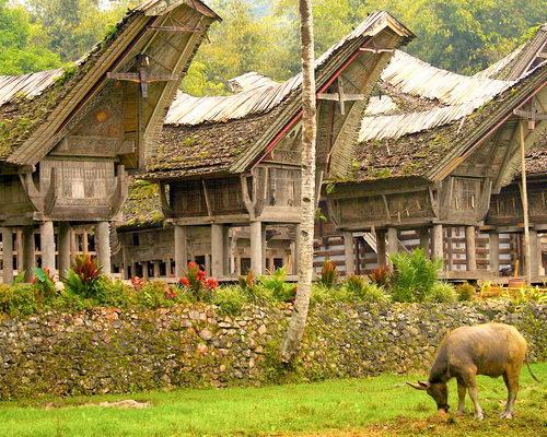 Tinuku.com Travel Kete Kesu Toraja, traditional village in row Tongkonan houses 300 years old, 500 years tombs and menhirs