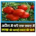 Tamater ki kheti-tomato farming-शुरू करें एक एकड़ में टमाटर की खेती होगी लाख की कमाई-SmartBusinessPlus