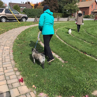 St. Francis day walk with companion animals