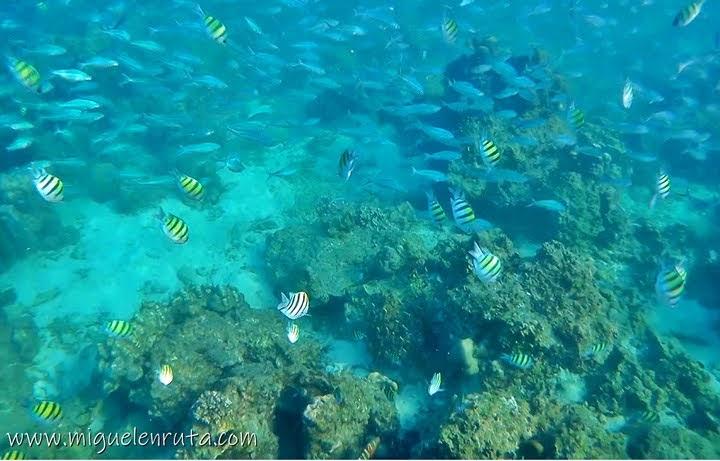 Arrecife en Shark Point, Islas Phi Phi