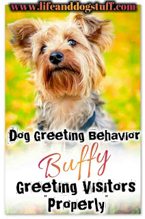 Dog Greeting Behavior - Buffy Greeting Visitors Properly