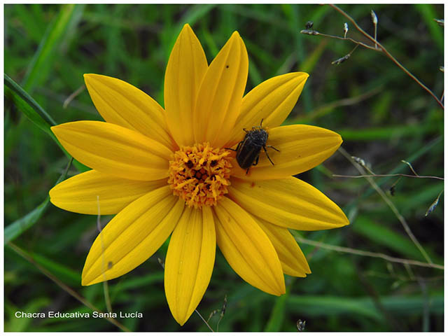 Reproducción sexual, flor, insecto - Chacra Educativa Santa Lucía