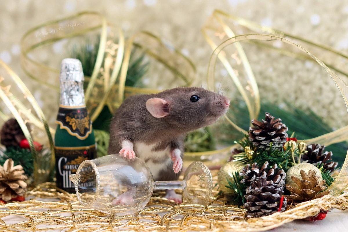 открытка мышка фото иногда достаточно