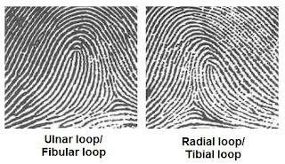 Loop (garis melingkar)