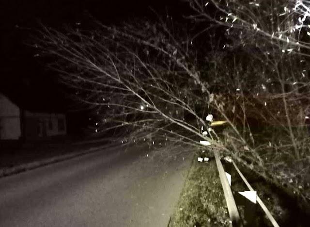 Podgryzione drzewo - interwencja OSP Gogołów