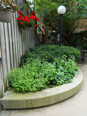 Toronto Downtown Courtyard Cleanup Before by Paul Jung Gardening Services--a Toronto Gardening Services Company