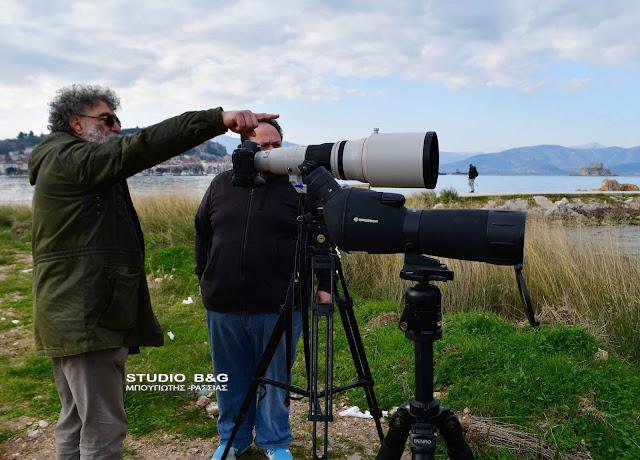 Μεσοχειμωνιάτικες Καταμετρήσεις Υδρόβιων Πουλιών στην Αργολίδα (βίντεο)
