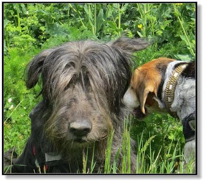 Hund mit Drecknase