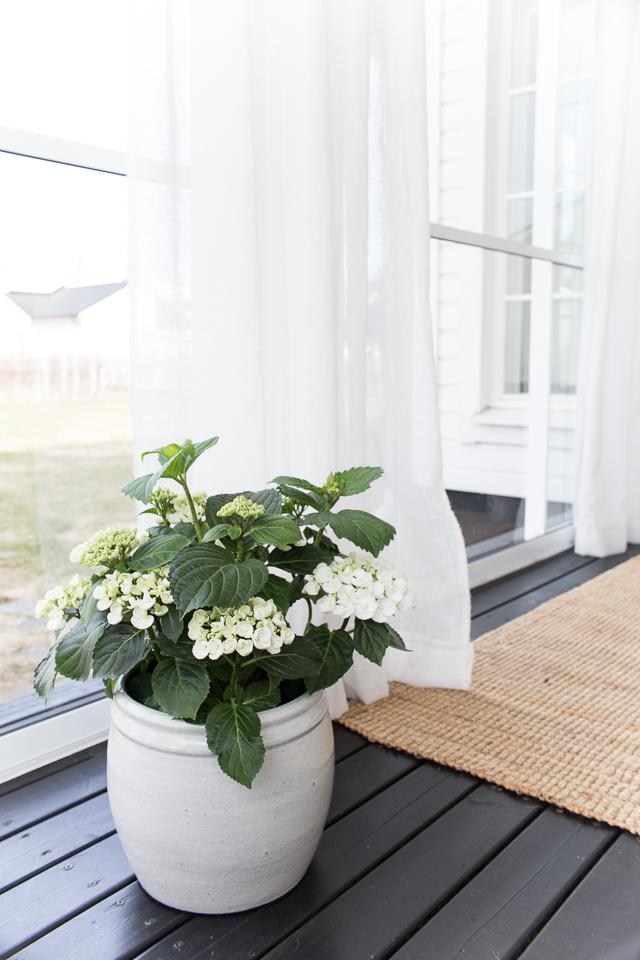 Ruukku hortensia, Villa H, terassin sisustus