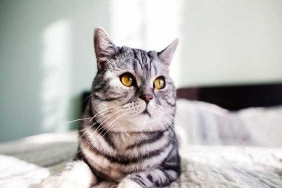 Cara Mudah Membasmi Kutu Kucing Dikamar Dengan Bahan Alami
