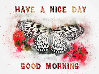 Good morning butterfly image
