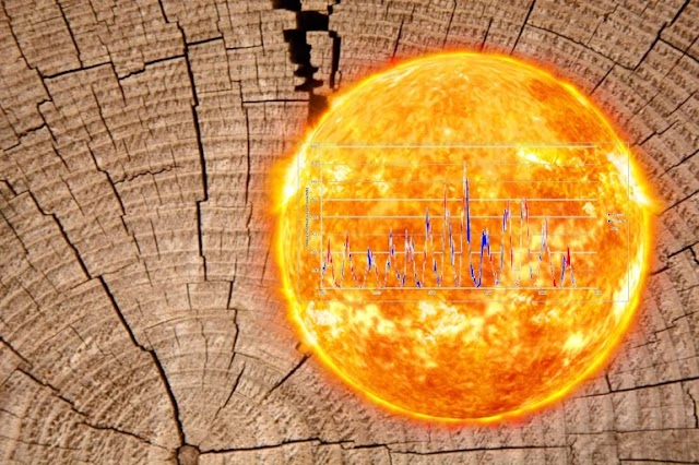 A Millennium of Solar Activity Recorded by Tree Rings With extreme precision