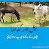 Bel Aur Gadah Urdu Kahani Online, Urdu Kahaniyan