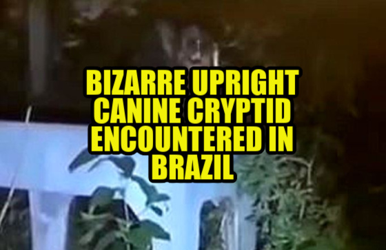 News & Notes: Bizarre Upright Cryptid Canine Encountered in Brazil (Video / Images)