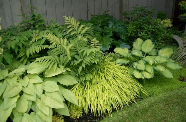 gradina de umbra plante pentru umbra flori perene amenajare gradina firma peisagistica design proiect gradina hosta crin de vara graminee de umbra feriga