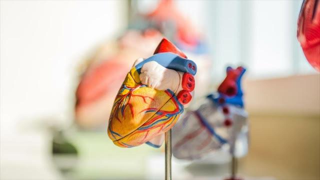 Una combinación de células madre podría reparar corazones dañados