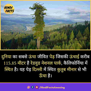 amazing facts about tree in hindi