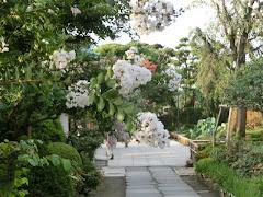 長谷寺のサルスベリ