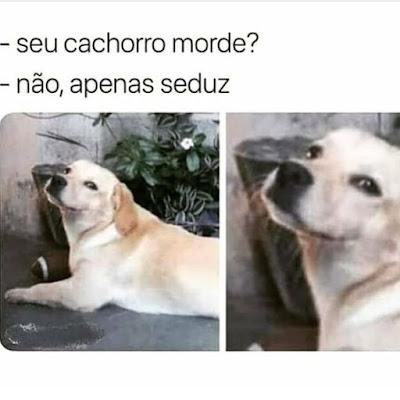 memes, melhores memes da net, melhor site de memes, site de memes, memes brasil, humor, engraçado, memes engraçados, comedia , cachorros, memes de cachorro