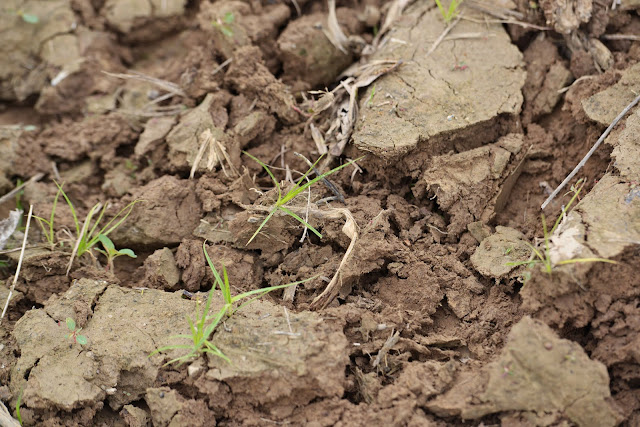 Cara meningkatkan kesuburan tanah