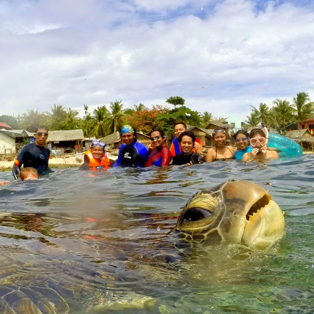 Photobomber Turtle