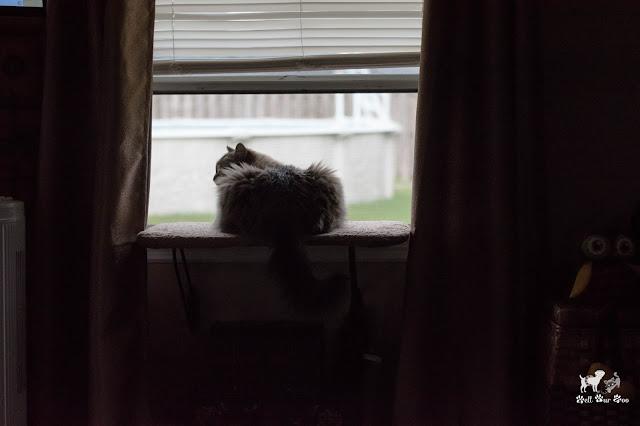 Squirrel/Bird TV (©Bell Fur Zoo)
