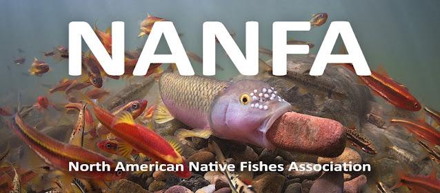 North American Native Fishes Association (NANFA)