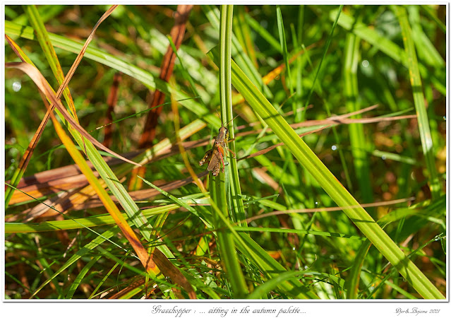 Grasshopper: ... sitting in the autumn palette...