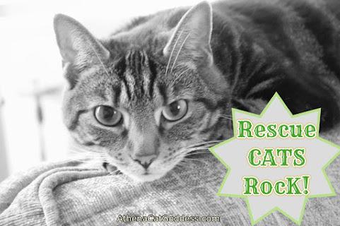 Rescue Cat Rock graphic